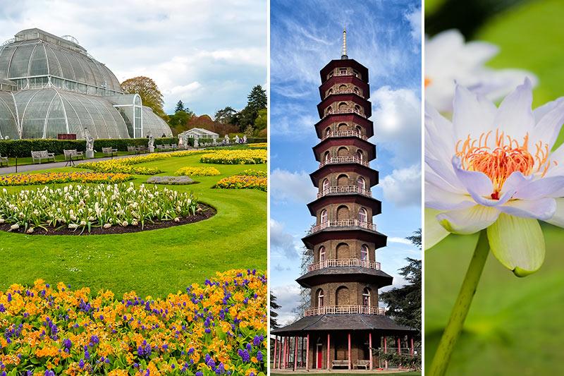 Kew Gardens - botanisk trädgård - tips och boka biljetter